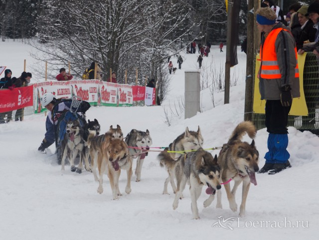 Гонки на собачьих упряжках 2012 в Тодтмосе-1841