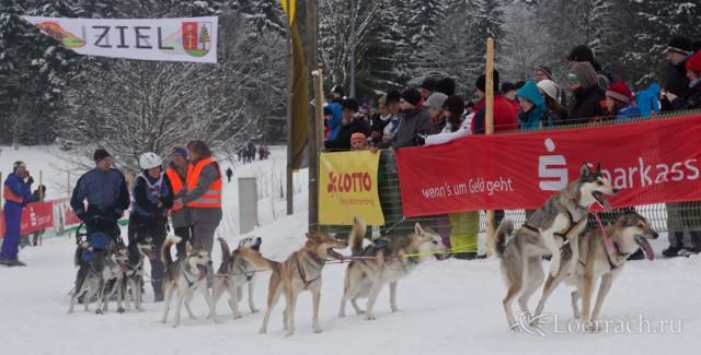Гонки на собачьих упряжках 2012 в Тодтмосе-1847