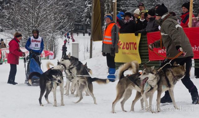 Гонки на собачьих упряжках 2012 в Тодтмосе-1868