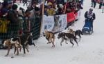 Гонки на собачьих упряжках 2012 в Тодтмосе-1919