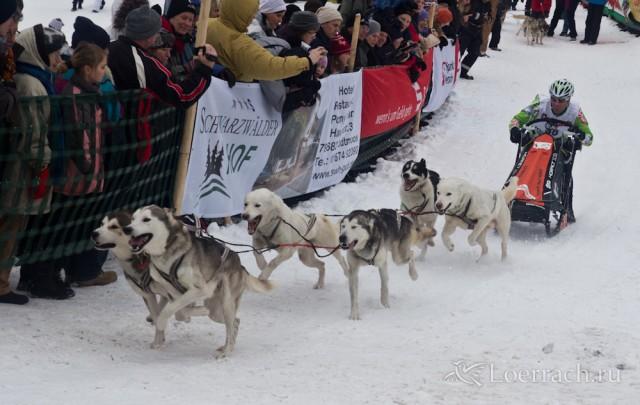 Гонки на собачьих упряжках 2012 в Тодтмосе-1922