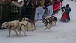 Гонки на собачьих упряжках 2012 в Тодтмосе-1933