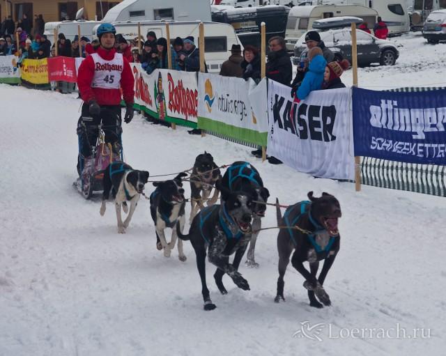 Гонки на собачьих упряжках 2012 в Тодтмосе-1954