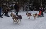 Гонки на собачьих упряжках 2012 в Тодтмосе-1990