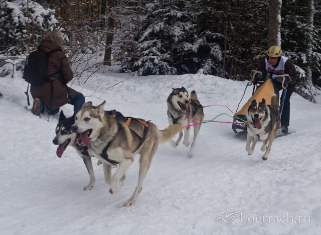 Гонки на собачьих упряжках 2012 в Тодтмосе-1995