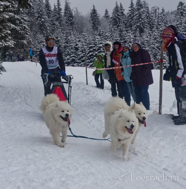 Гонки на собачьих упряжках 2012 в Тодтмосе-2074